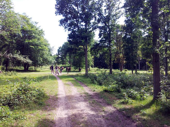 Wildpferde treffen Radfahrer im Wald.