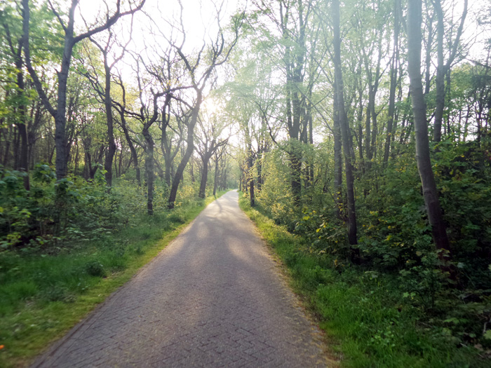 Romantischer Radweg im Eichenwald.