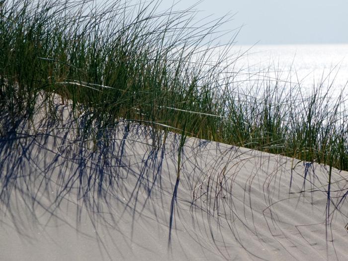 Schattenspiel vom Strandhafer im Dünensand.