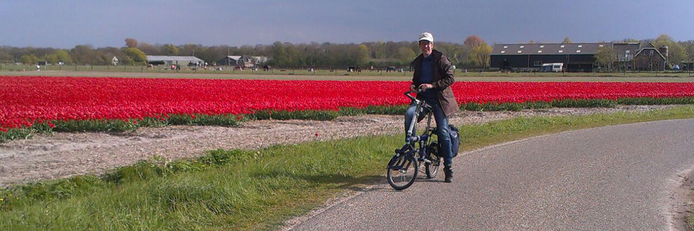 Radfahrerin in den Blumenfeldern bei Amsterdam